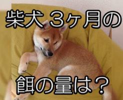 柴犬の3ヶ月の餌の量は?