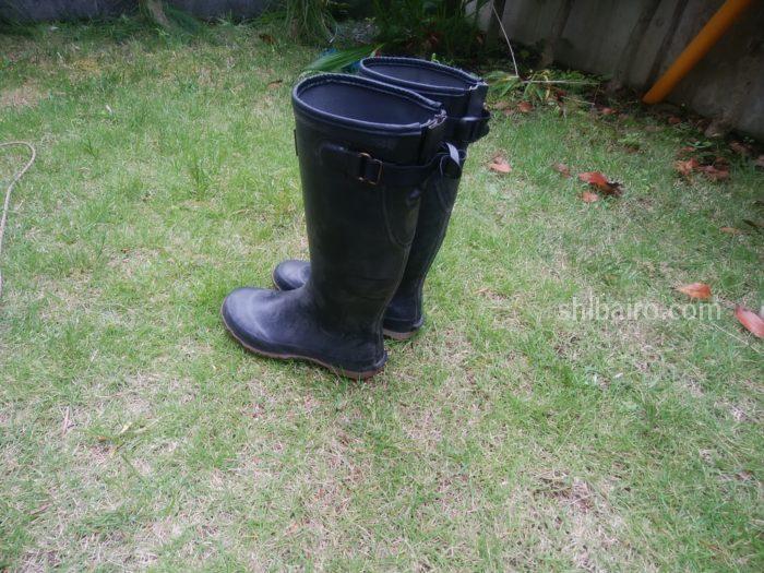 柴犬の雨の日散歩の長靴
