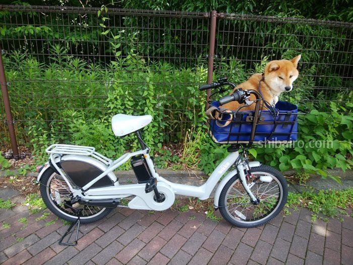 柴犬用電動アシスト自転車