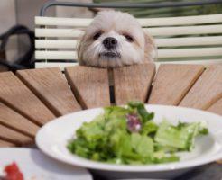 柴犬がドッグフードを食べない