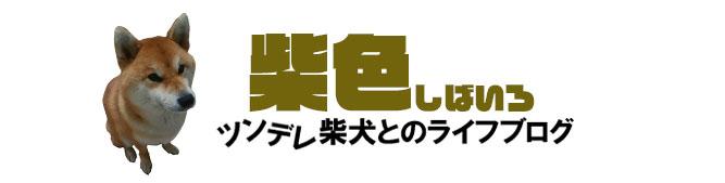 柴色|ツンデレ柴犬とのライフブログ