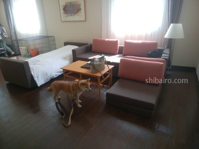 星野リゾートに犬と宿泊しました【八ヶ岳リゾナーレ