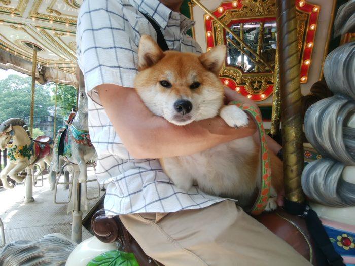柴犬とメリーゴーランド