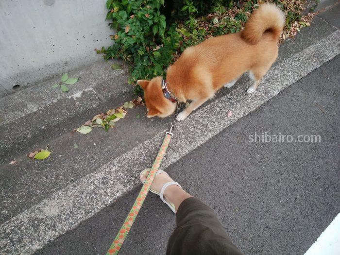 足裏除菌してナマ足散歩