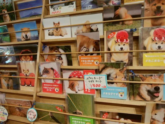 柴犬まるのポストカード