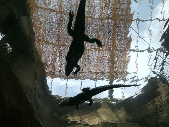 熱川バナナワニ園のドーム水槽