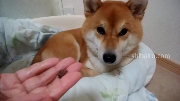 犬の歯磨き 4ステップ