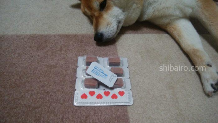 犬のフィラリアの薬