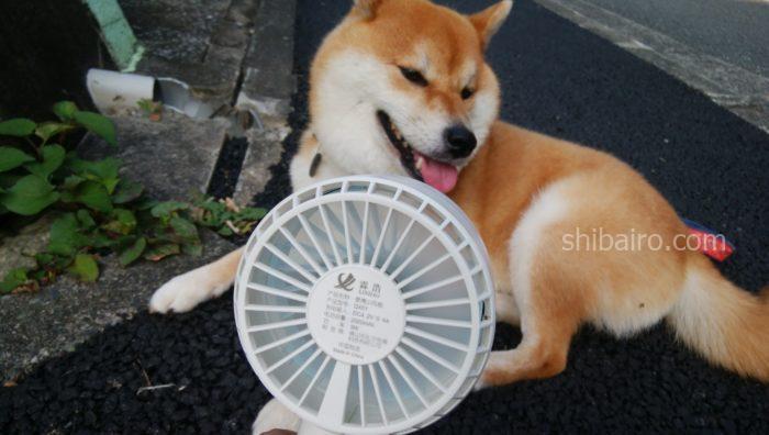犬の散歩の暑さ対策